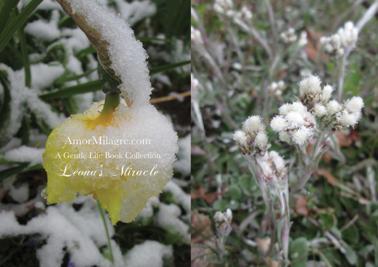 Amor Milagre Leona's Miracle 1st Spring Festival The Love Letter Diaries #4 ethical book series amormilagre.com 11