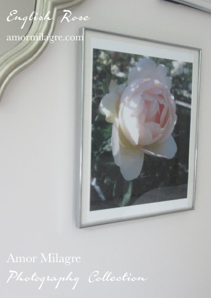 English Rose Photography Art Print Amor Milagre amormilagre.com